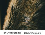 Brown Natural Fur Texture Background - Fine Art prints