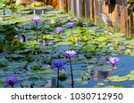 singapore. herons in a lotus... | Shutterstock . vector #1030712950