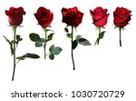 five red roses on a long stem... | Shutterstock .eps vector #1030720729