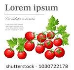 fresh cherry tomatoes vegetable ... | Shutterstock .eps vector #1030722178