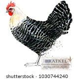 Braekel Hen. Poultry Farming....