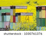 beehife on rape field abstract... | Shutterstock . vector #1030761376