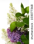 Bouquet Of Lilac Isolated On...