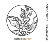 vector sticker of coffee tree ... | Shutterstock .eps vector #1030789309