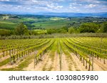 a plantation of grapevines ... | Shutterstock . vector #1030805980