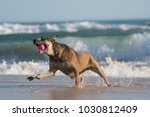 a horizontal  color photograph... | Shutterstock . vector #1030812409
