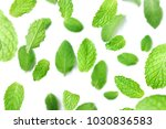 peppermint top view. peppermint ... | Shutterstock . vector #1030836583