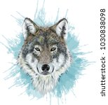 realistic vector wolf  ...