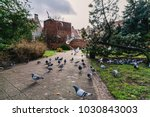 Small photo of Pigeons and seagulls argue over food in the park in Gdansk