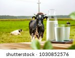 milk and landscape of spring... | Shutterstock . vector #1030852576