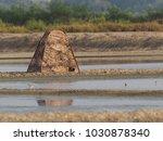 bird watcher take a bird photo   Shutterstock . vector #1030878340