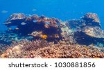 beautiful coral reef and... | Shutterstock . vector #1030881856