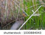 jade  kingfisher  season of... | Shutterstock . vector #1030884043