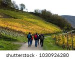 hiker on the red wine hiking... | Shutterstock . vector #1030926280