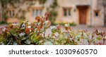 a traditional english cotswold... | Shutterstock . vector #1030960570
