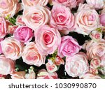 colorful rose flower background | Shutterstock . vector #1030990870