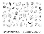 tropical fruits colorful vector ... | Shutterstock .eps vector #1030996570