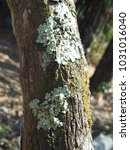 Light Green And Gray Lichens...