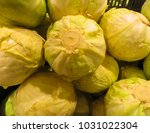 fresh cabbage grown in the... | Shutterstock . vector #1031022304