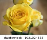closeup yellow roses on wooden... | Shutterstock . vector #1031024533