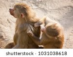 mother with baby on her back of ... | Shutterstock . vector #1031038618