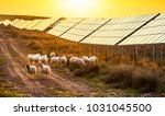 flock of sheep pasturing under... | Shutterstock . vector #1031045500