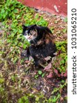 Small photo of cowardly unusual spotted multicolor cat with interestinr color coat outside in spring time