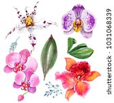 beautiful watercolor orchids... | Shutterstock . vector #1031068339