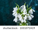 snowdrops in a glass bowl on a... | Shutterstock . vector #1031072419
