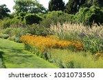 Rudbeckia  Coneflowers  Black...