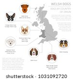 dogs by country of origin.... | Shutterstock .eps vector #1031092720
