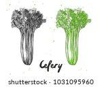 vector engraved style... | Shutterstock .eps vector #1031095960