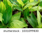 beautiful tropical plants | Shutterstock . vector #1031099830