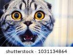 cute shocked cat | Shutterstock . vector #1031134864