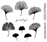 ginkgo biloba leaf set. vector... | Shutterstock .eps vector #1031137063