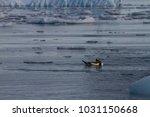 penguin swimming in the ocean ... | Shutterstock . vector #1031150668