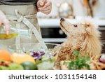 pouring olive oil on freshly... | Shutterstock . vector #1031154148