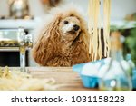 young woman with her dog doing... | Shutterstock . vector #1031158228