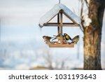 Five Birds In The Snowy Winter...