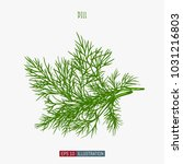 hand drawn dill isolated.... | Shutterstock .eps vector #1031216803