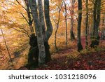 colorful gold autumn photo ... | Shutterstock . vector #1031218096