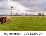 sheep on the meadow in front of ... | Shutterstock . vector #1031239204