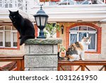 street cats on the garden wall | Shutterstock . vector #1031261950
