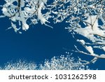 snowy tree branches against the ... | Shutterstock . vector #1031262598