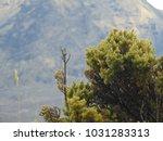 haleakala crater in background | Shutterstock . vector #1031283313