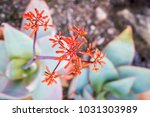 view from above of coral aloe ... | Shutterstock . vector #1031303989
