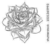 succulent cactus flower  hand... | Shutterstock .eps vector #1031365993