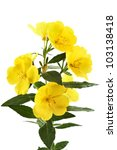 Yellow Flowers Buttercups It I...