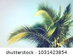 detail of coconut trees with... | Shutterstock . vector #1031423854