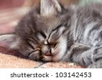 Stock photo the kitten sleeps 103142453